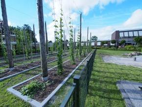 Frysk Fietsbier wordt exclusief voor Friesland Holland gebrouwen bij Us Heit in Bolsward (brouwerij met een eigen hoptuin!) onder supervisie van meesterbrouwer Aart van der Linde. Meer info: http://www.bierbrouwerij-usheit.nl/
