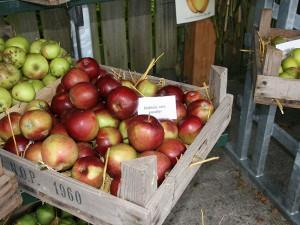 Pomologen onderzoeken 10 oktober 2015 in De Kruidhof appels uit uw eigen tuin. Frytsjam uit Twijzel maakt er ter plekke sap en moes van, als u dat wilt.