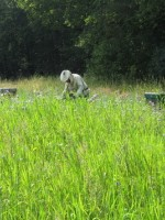 Bijenvereniging Wolvega e.o.