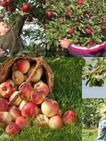 De Fryske Frucht