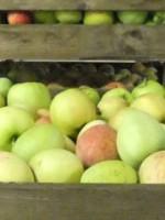 Frytsjam Fruit en Fruitverwerking